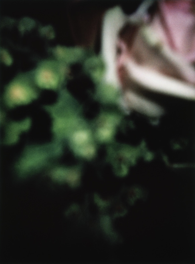 polaroid_12